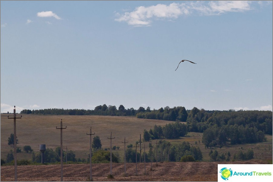 Peto linnut lentävät peltojen yli