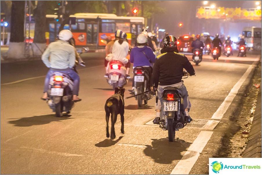 Koira kävely polkupyörällä