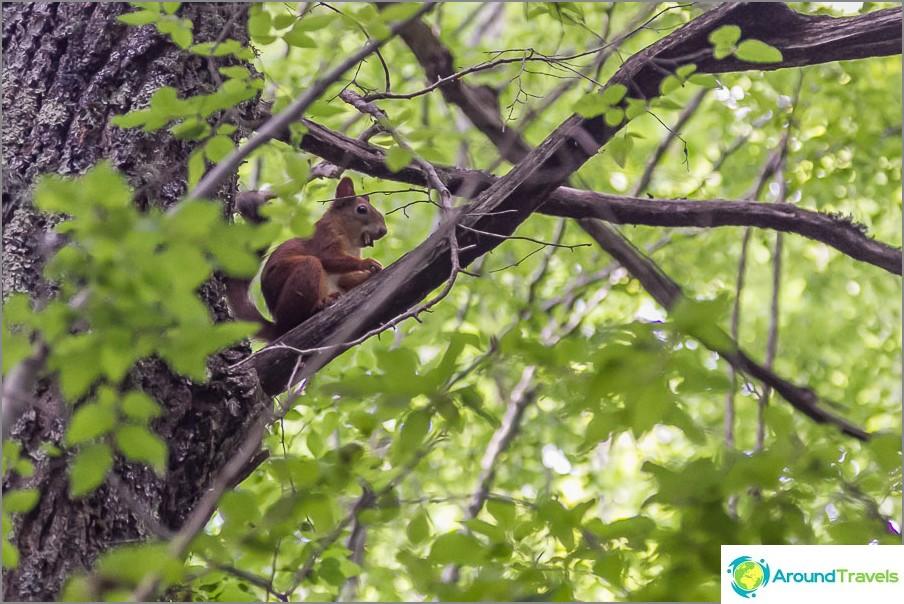 Jotain hamsteria oravan oksalla