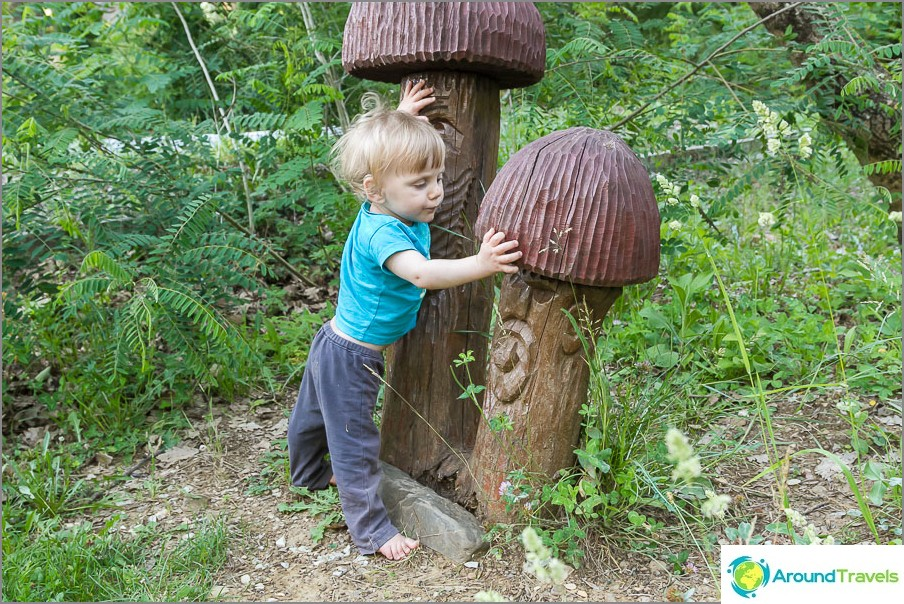Mikä sieni valita ...