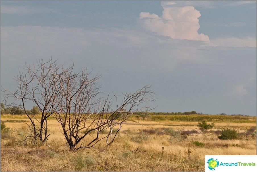 Африканска савана