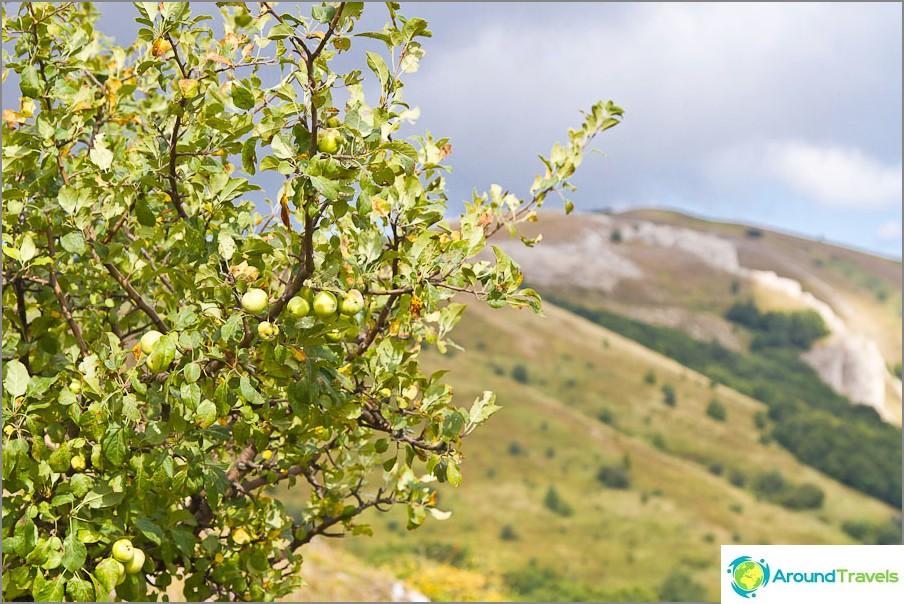 Omenat kasvavat kaikkialla