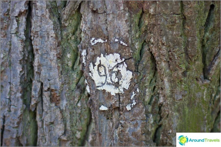 Jotkut puut on numeroitu