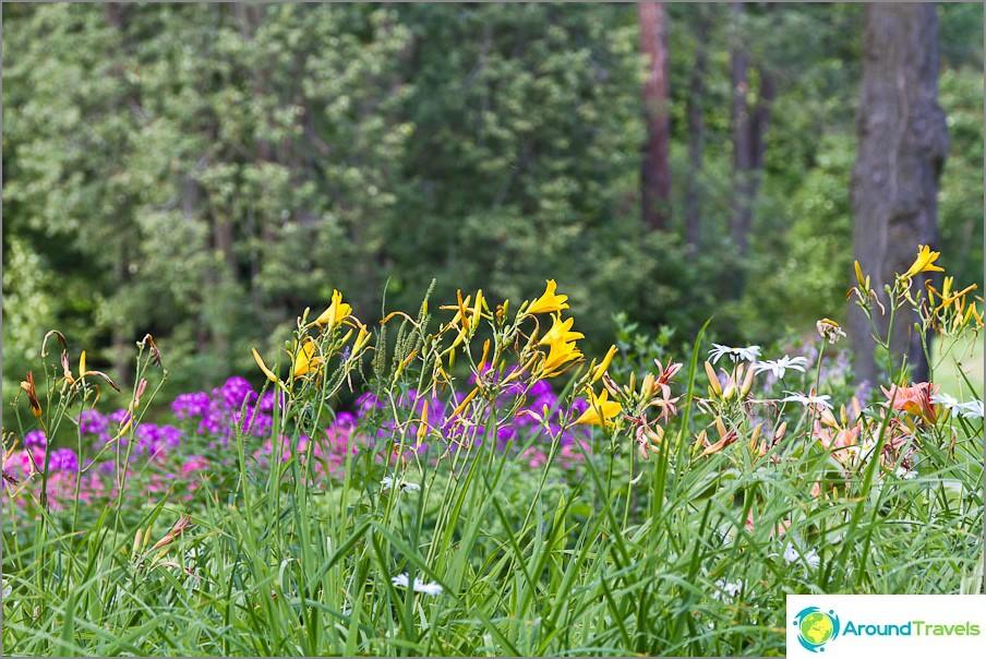 Kaikenlaisia kukkia kasvaa kaikkialla
