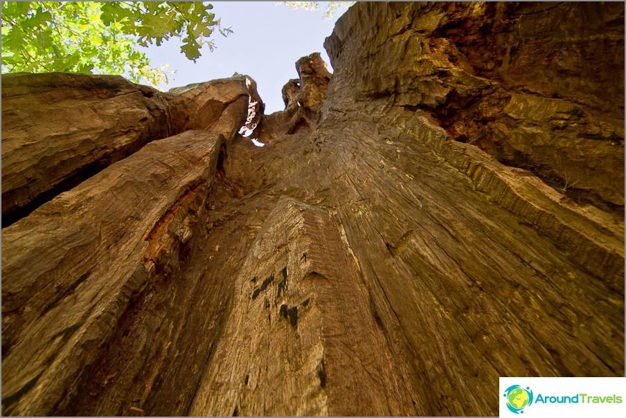 Monivuotinen puu, tai pikemminkin rungon jäänteet