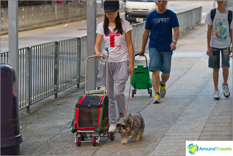 Koiran kävely ja koiravaunu