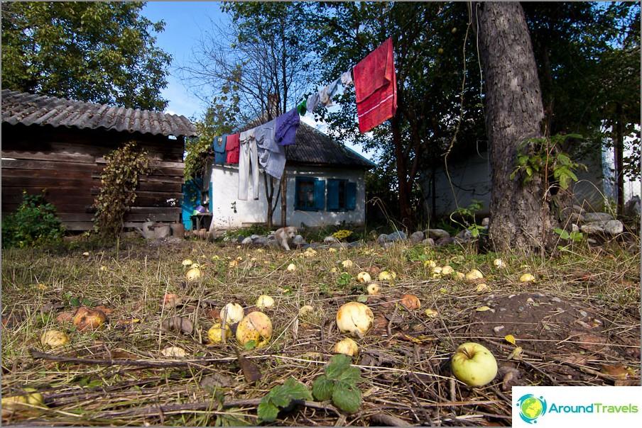 Sen omenat, ei moldovalaisia
