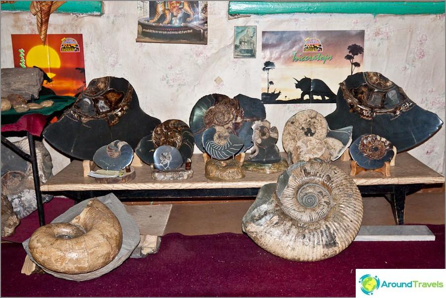 Ammonite-kokoelma Eugene