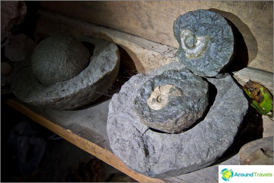 Ammoniitit ovat pyöreiden kivien sisällä