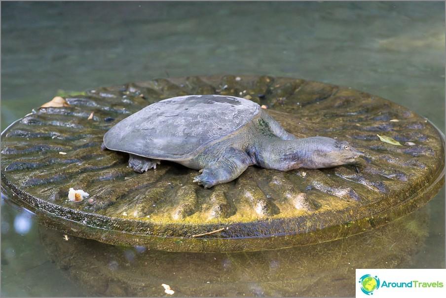 Lampi kilpikonna ja kalat