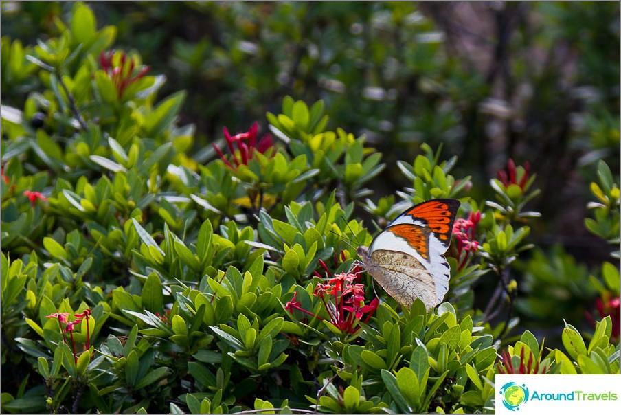 Perhojen sijaan kaupungissa lentävät perhoset