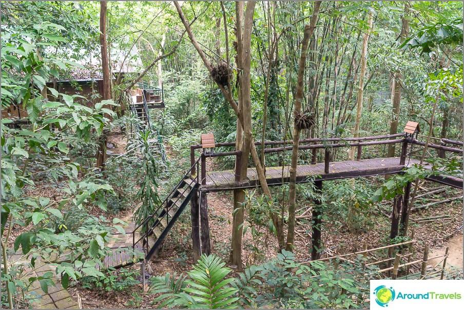 Yöpyminen kansallispuistossa puutalossa - Treehouse Resort