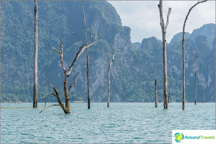 Puiden yläosat pysyivät, vaikka ne tulvatkin vuonna 1982