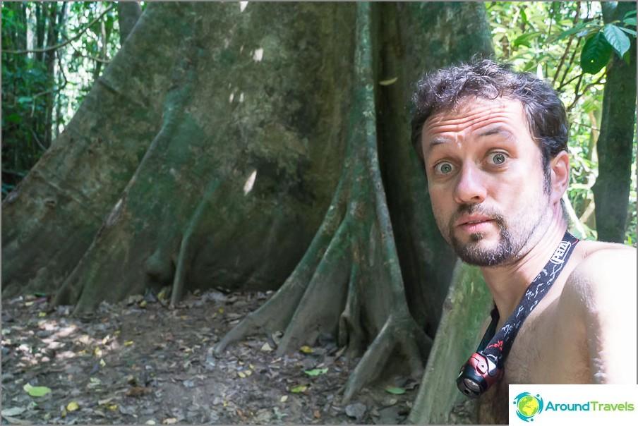 Mitkä ovat puun juuret!