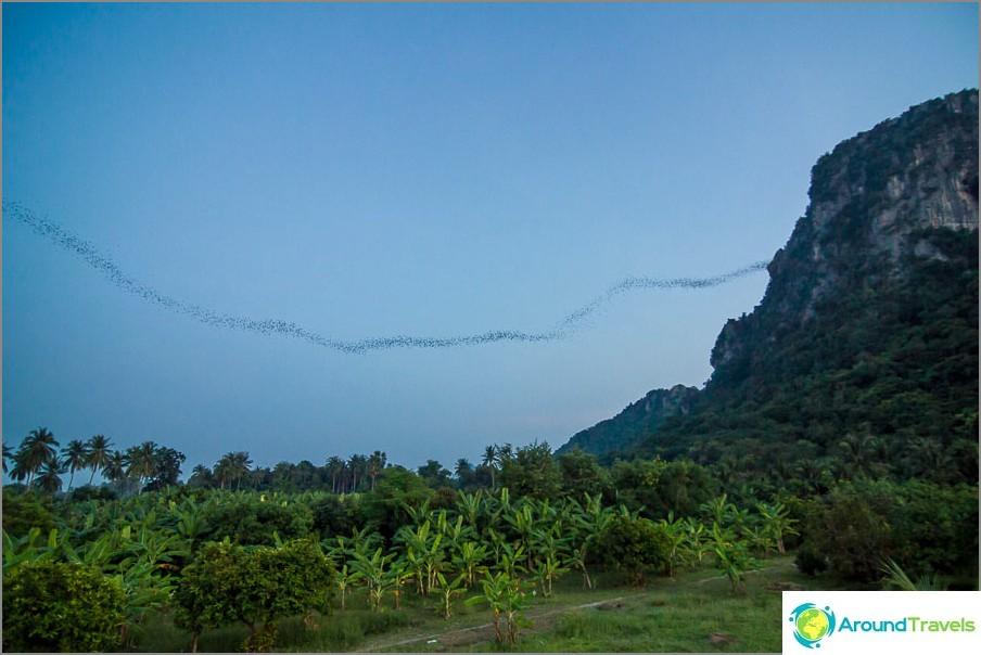 Lepakoiden vuori lähellä Chaamia