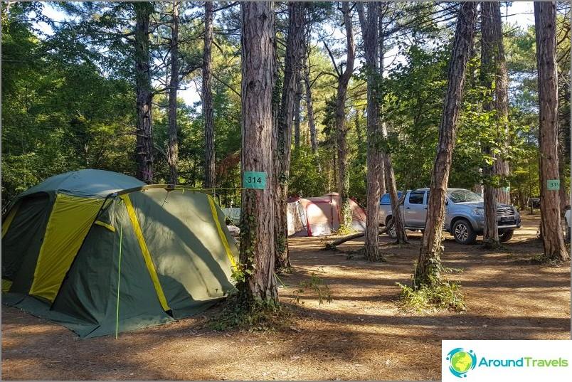 Saavuimme leirintäalueelle Pine Paradise, rakastan mäntyjä!