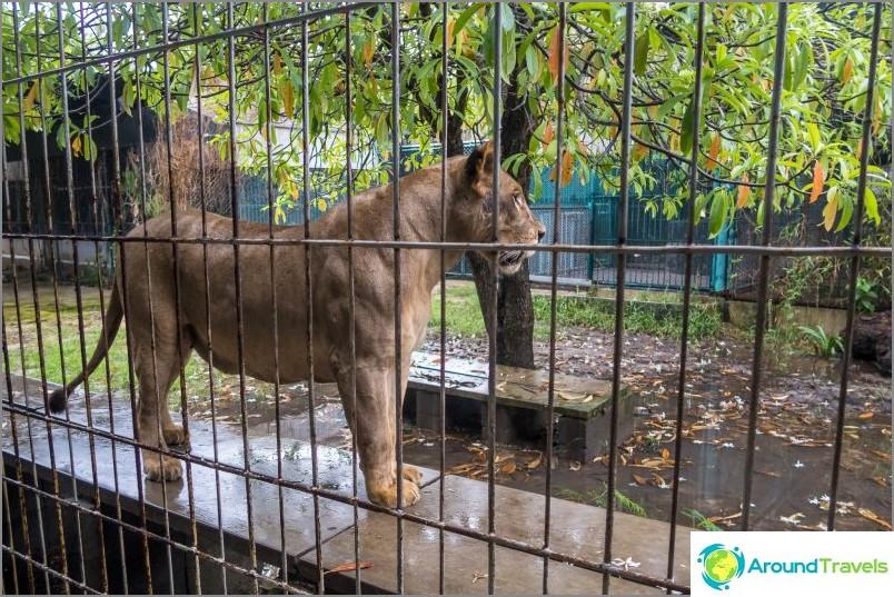 Akvaario ja tiikeri-eläintarha Samuilla - surullinen ja kallis