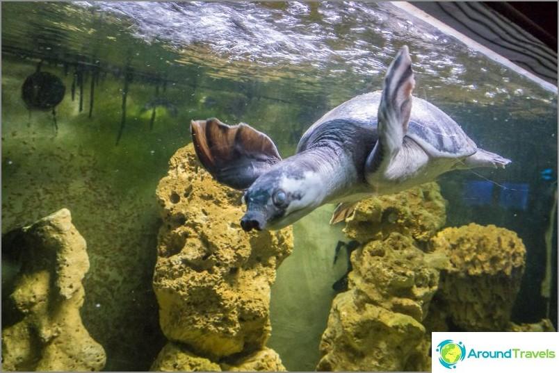 Pitkäkaulaiset kilpikonnat