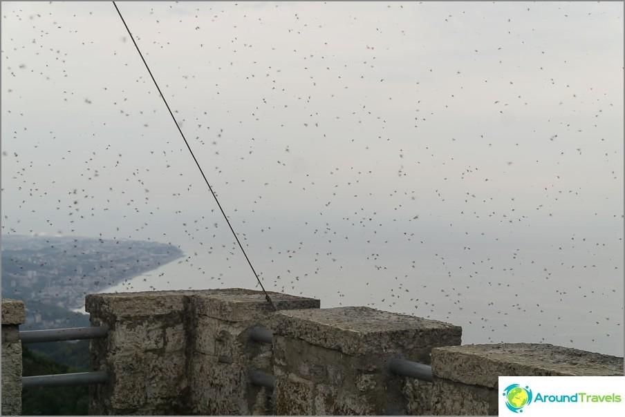 Стадо мухи на кулата Ахун