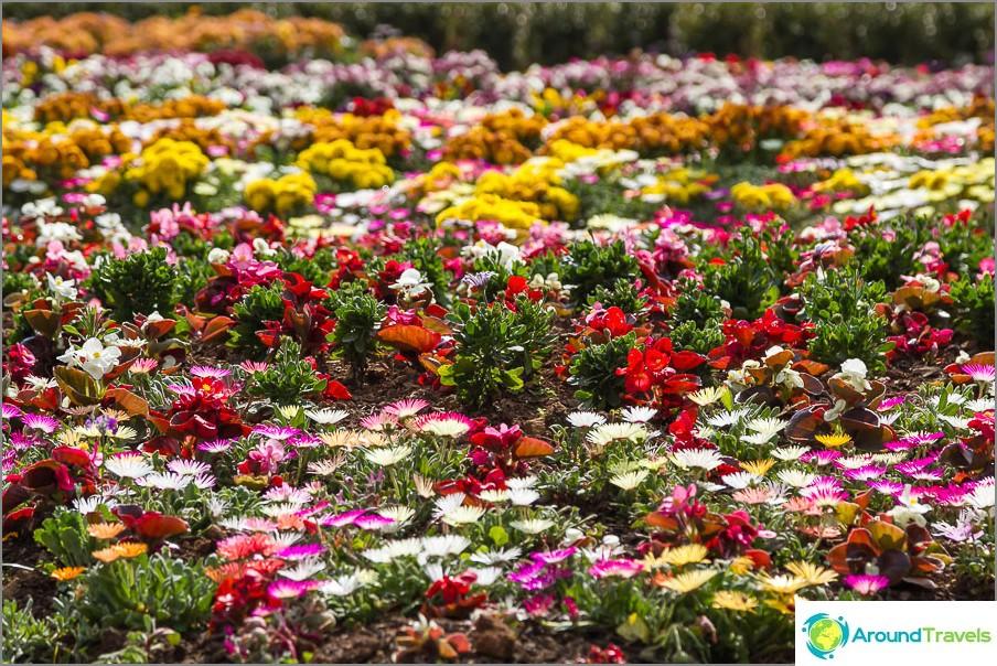 Kukat päiväpeite