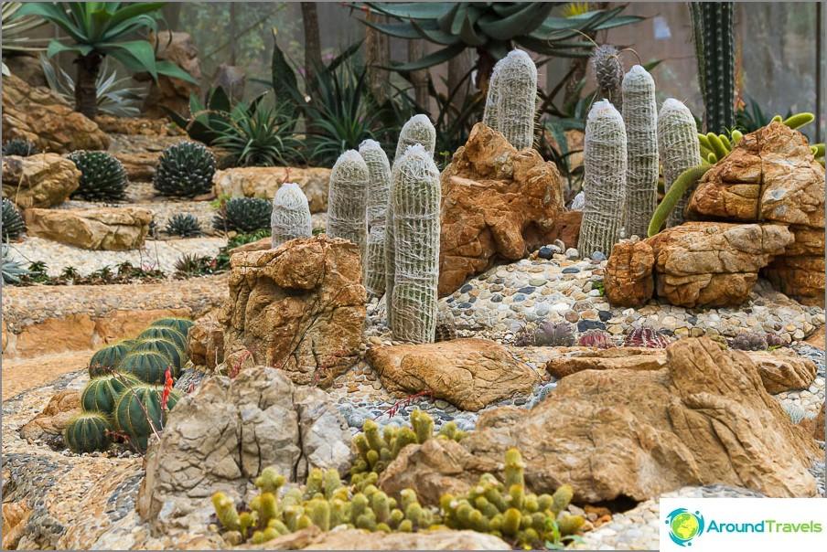 Kaktuspaviljonki