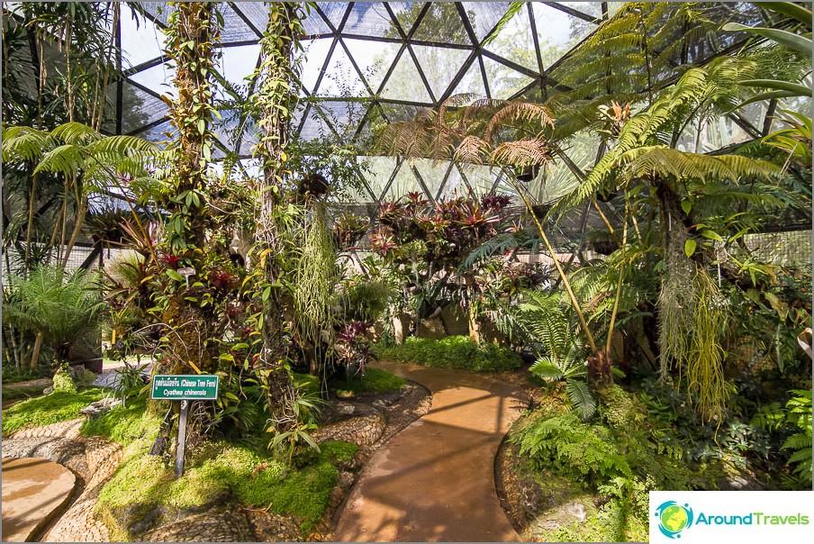 Trooppinen paviljonki, kaikki on kasvanut ja kostea