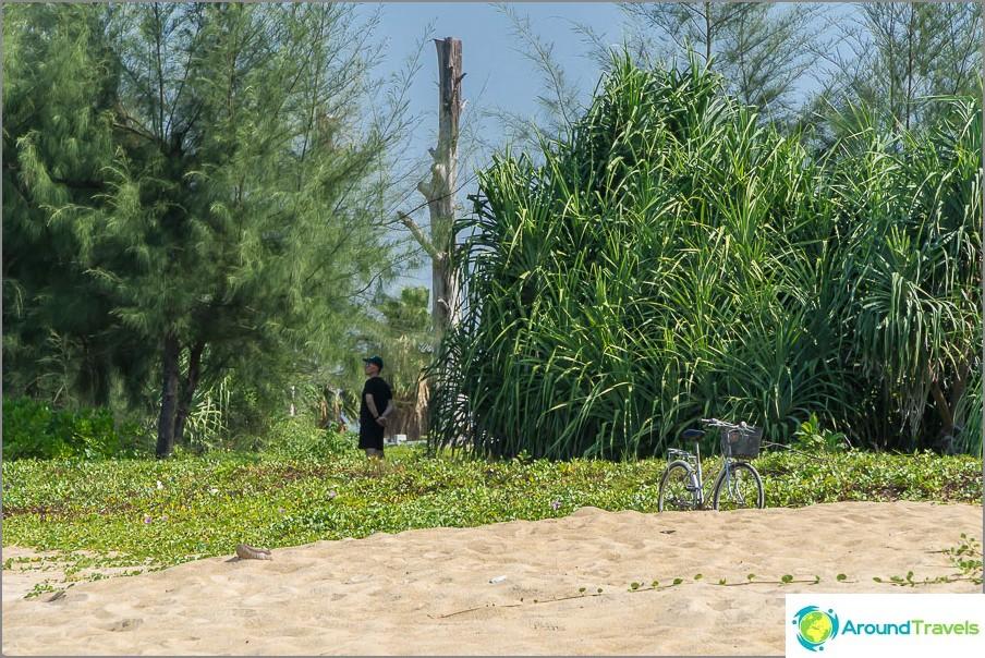 Tuomarit piiloutuvat pensaisiin aurinkoa vastaan