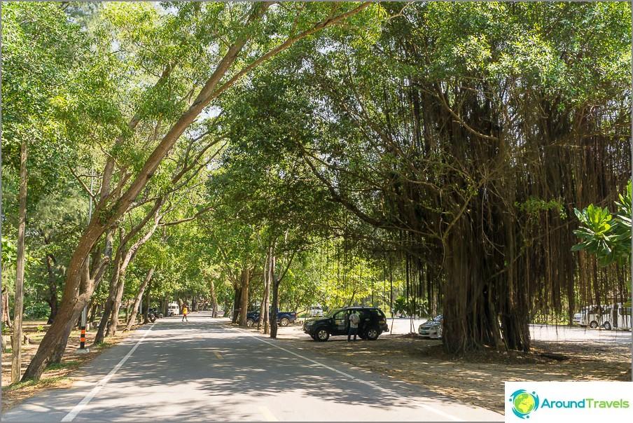 Tie luonnonpuiston läpi