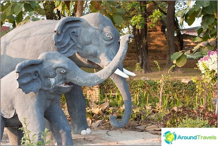Elefantit ovat aina tyytymättömiä johonkin täällä.