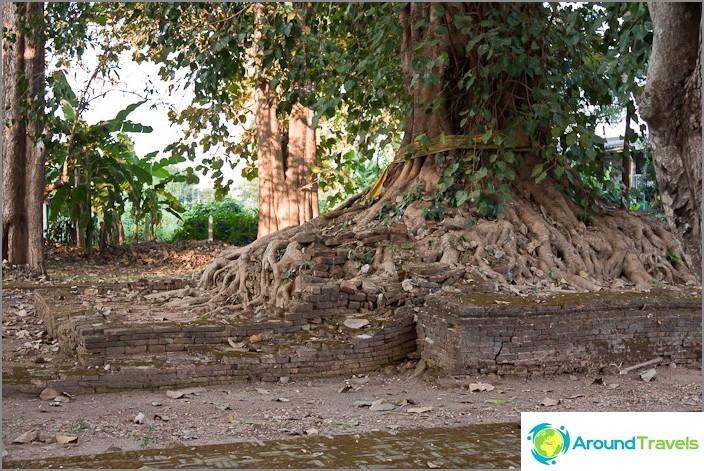 Puut valloittavat alueen muinaisesta arvonlisäverosta