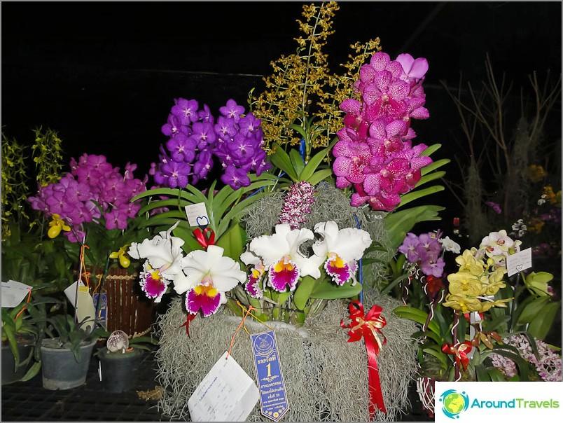 Orkideat Thaimaan kukkafestivaalilla