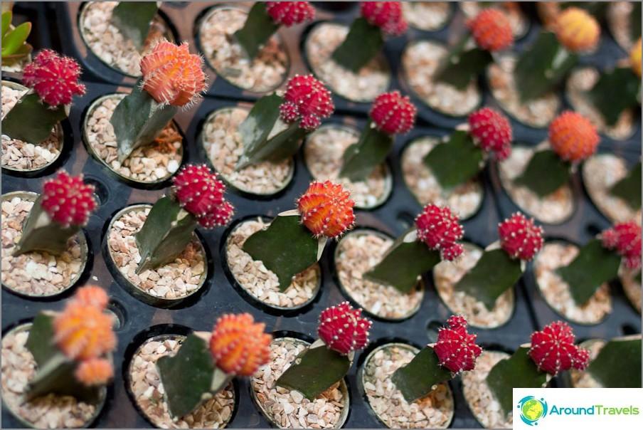 Vihreät laskurit kukkafestivaalilla