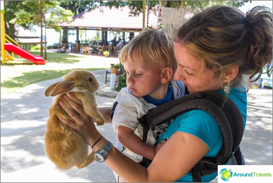Kani on myös pelottava peto