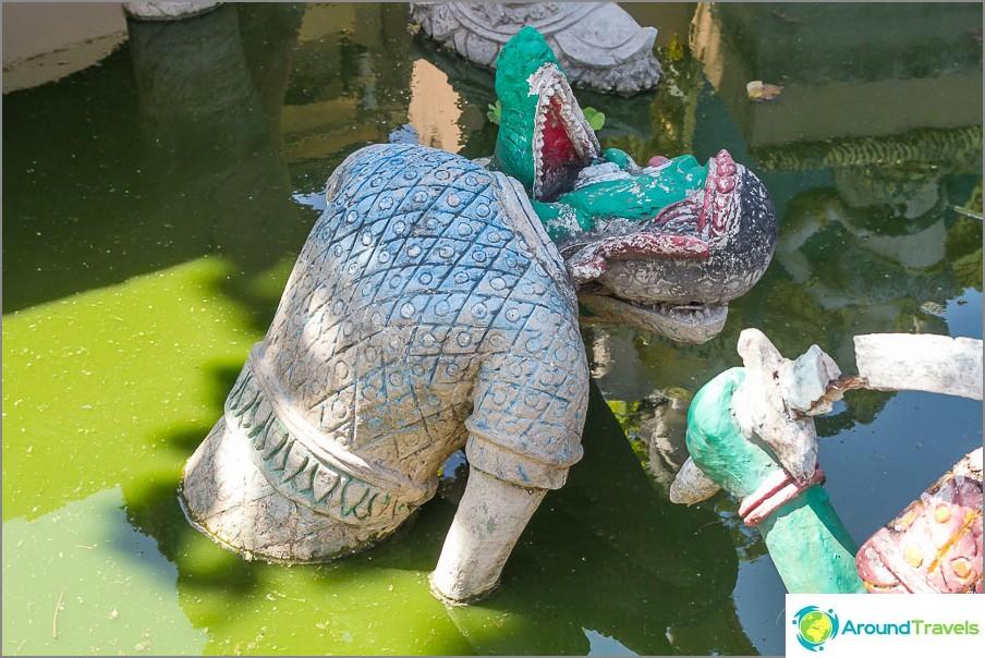 Vihreässä nesteessä joku asettaa päänsä krokotiilin leukoihin