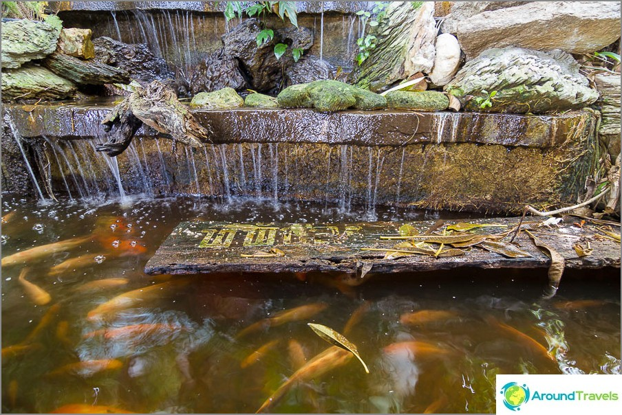 Mini vesiputous ja kalat