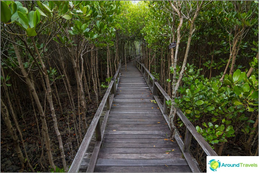 Paluumatkalla mangrove ovat hieman alempia.