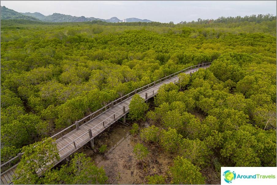 Näkymä mangrove-alueelle