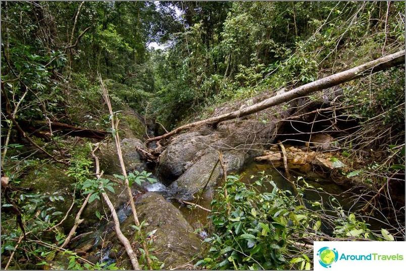 Има истинска природа и джунглата