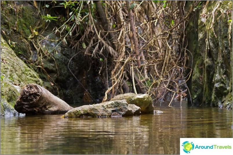 Klong Chao Luamin vesiputous - todellinen luonto ja viidakko!