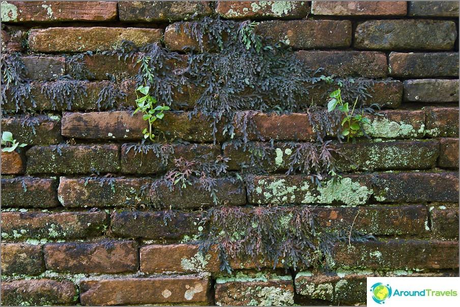 Tiili on jo peitetty kasveissa ja sammalissa.