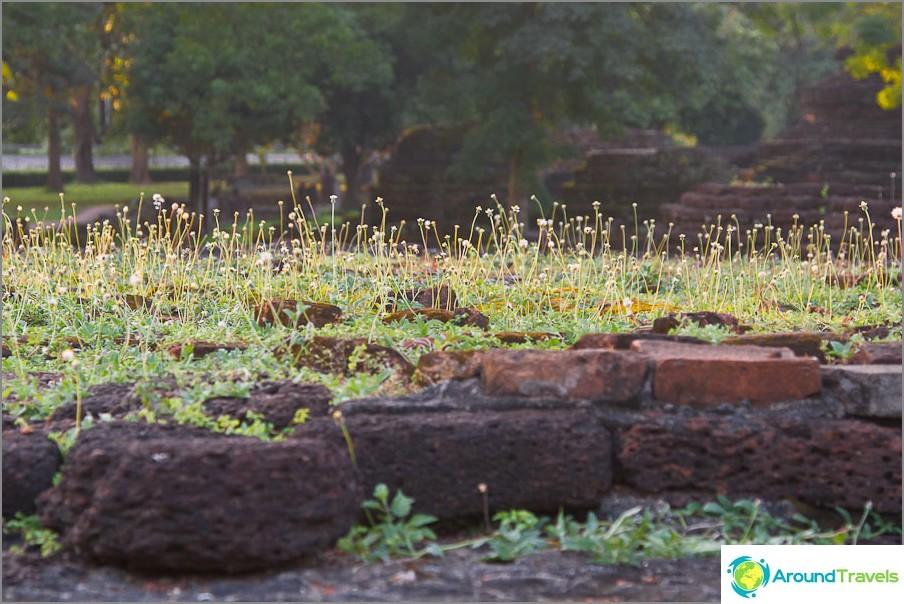 Koko nurmikko on kasvanut seinälle