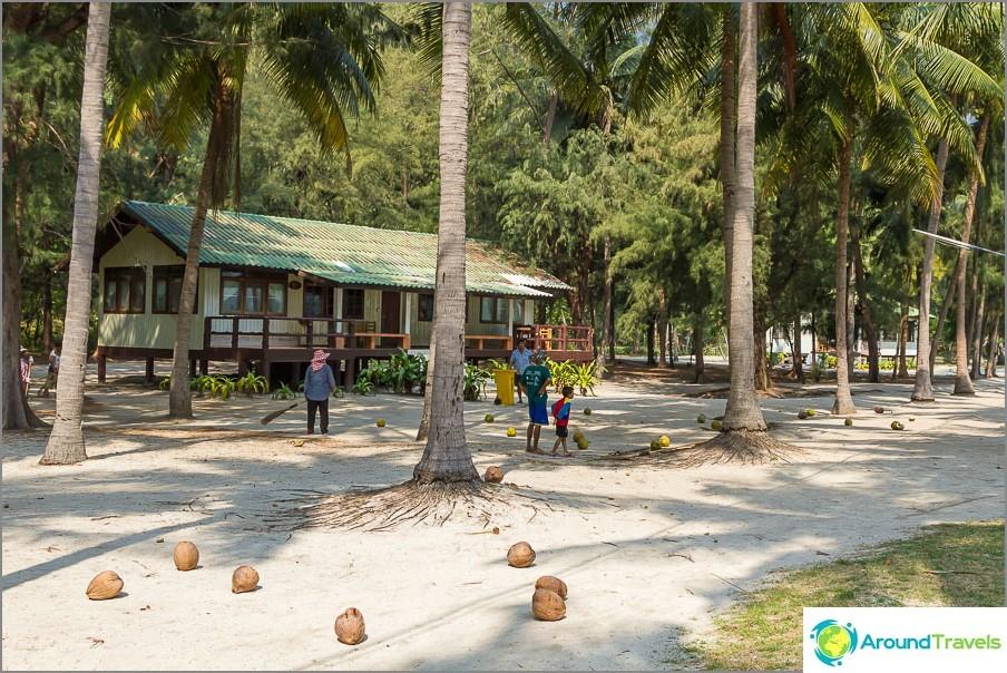 Paikalliset kookospähkinät