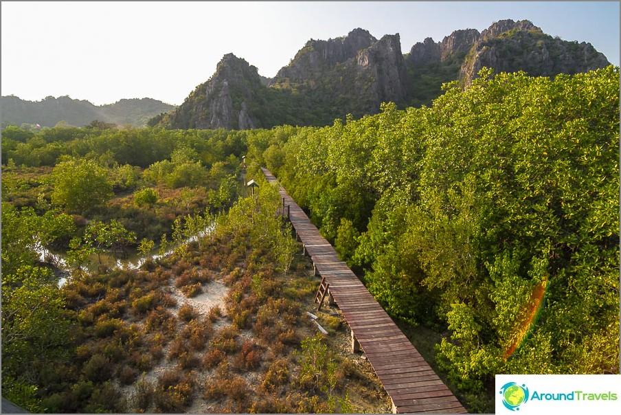 Sillat mangrovejen läpi, näkymä tornista