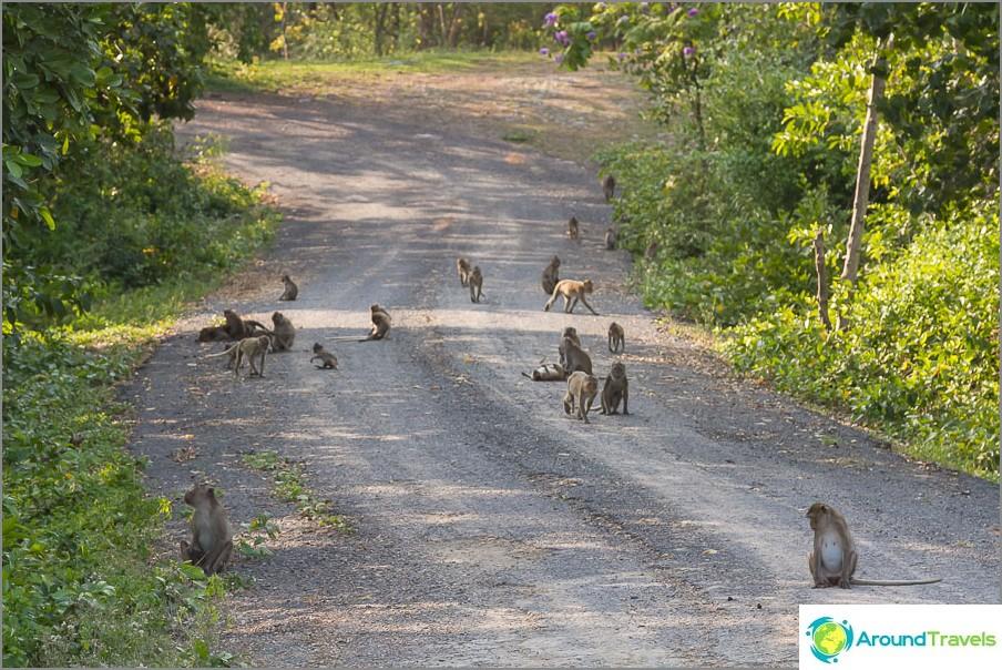 Apinat kansallispuistossa