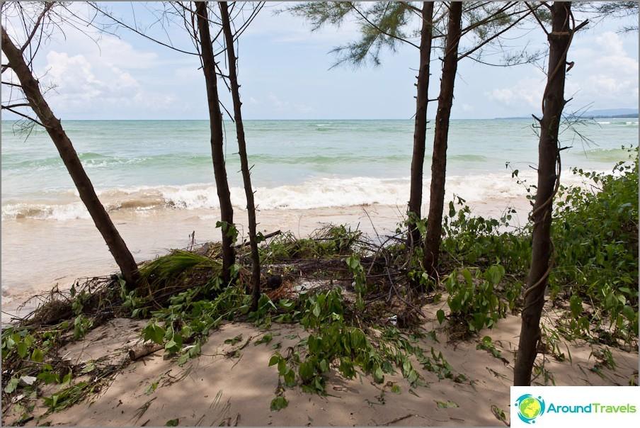 Nousuveden aikana aallot melkein pesevät puita