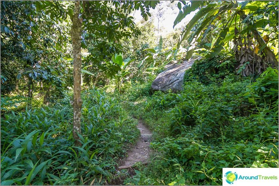 Polku oikean viidakon läpi