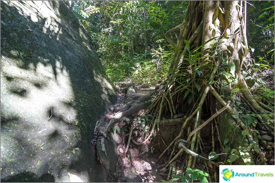 Kiivetä juurten ja kivien läpi