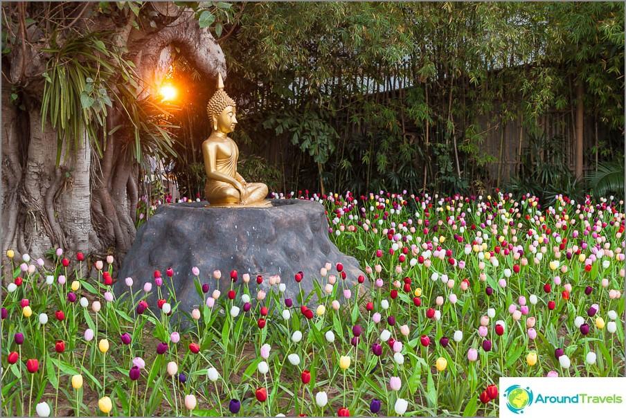 Takapihalla buddha, jota ympäröivät keinotekoiset tulppaanit