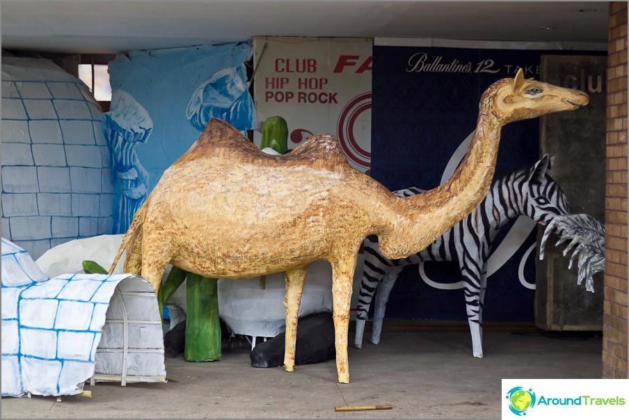 Valmiina kamelinkirahvi