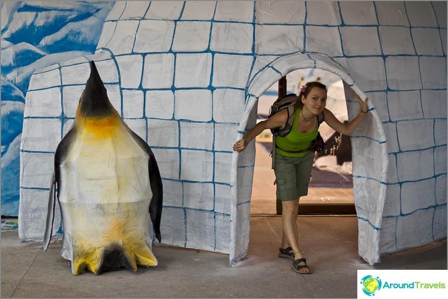 Penguin's Ice -asunnot valmis